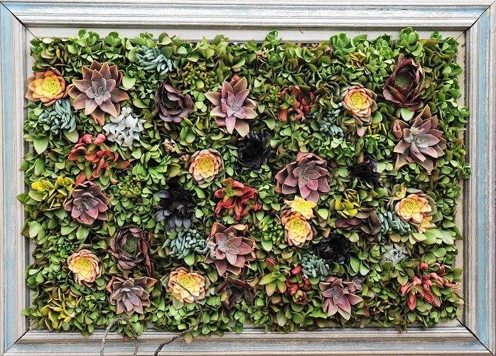 les plantes succulentes et l 39 art du jardinage infolettres de rock gigu re jardins histoire. Black Bedroom Furniture Sets. Home Design Ideas