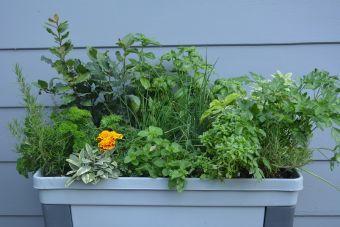 Une balconnière de fines herbes