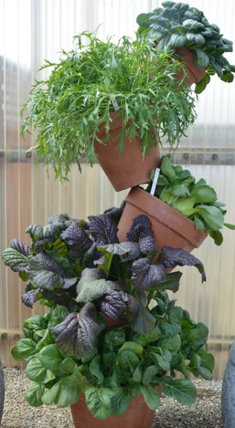 plante asiatique