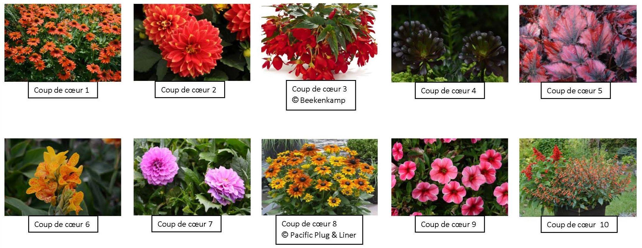 Plantes gagnantes concours Tendances horticoles 2015
