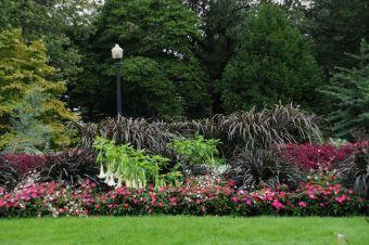 Les millets pourpres 'Prince' et 'Princess', Jardin botanique de Montréal, le 13 septembre 2011.