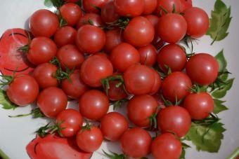 La tomate cerise 'Sweet Treats' de la compagnie japonaise Sakata contiendrait entre 8 à 9 °Bx.