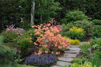 Chez-moi : je n'ai jamais tenu compte du pH de mon sol ou des besoins de la plante en ce sens.