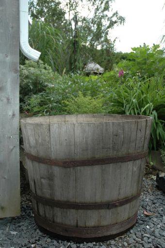 L'eau de pluie est une source naturelle qui peut être utilisée pour les besoins en eau des plantes.