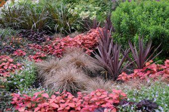 Certaines plantes présentent une silhouette ou un graphisme particulier qui rehausse la décoration d'une cour ou d'un jardin.
