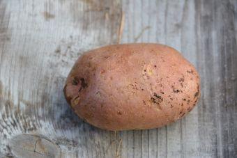 Solanum tuberosum 'Canberra'