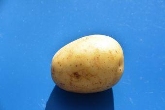 Solanum tuberosum 'Oriana'