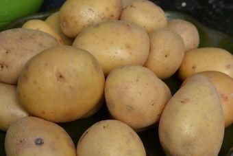 Les pommes de terre et les tomates appartiennent à la même famille, soit celle des Solanacées.