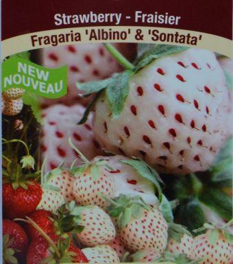 Photo que j'ai prise de l'étiquette de vente des fraisiers Natural Albino® et 'Sonata'.