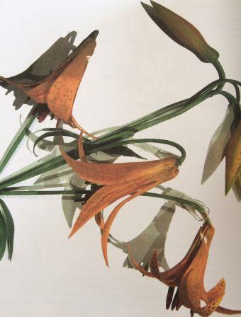 Curieuses histoires de plantes du Canada