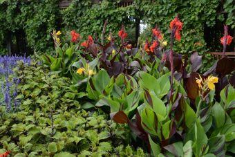 Jardin botanique de Montréal, 2015-07-23