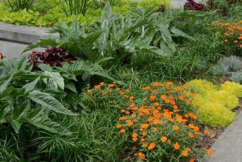 artichaut, papyrus et zinnia à fleurs oranges