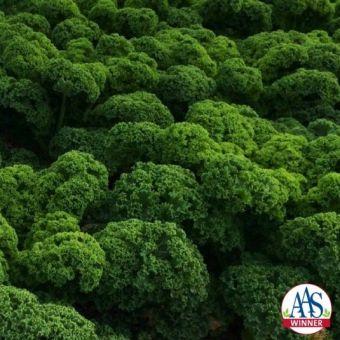 Brassica oleracea 'Prizm'