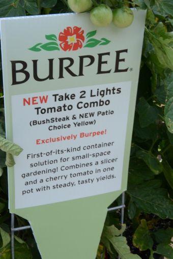 Affiche Solanum Combo Take 2