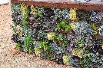 palette de succulentes
