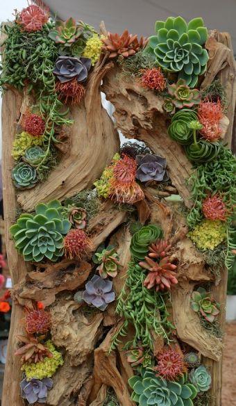 Cadre de bois de mer et succulentes