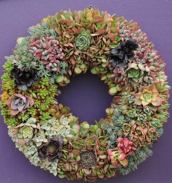 Couronne de succulentes