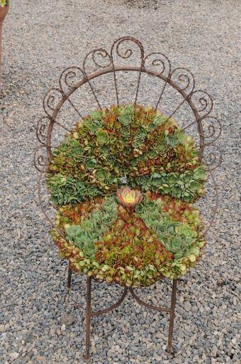 Chaise et succulentes