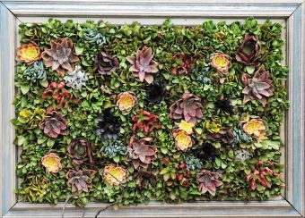 Tableau impressionniste de succulentes