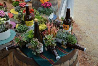 Succulentes en bouteille