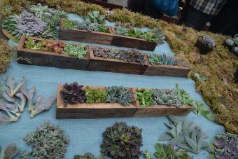 Boîtes à succulentes