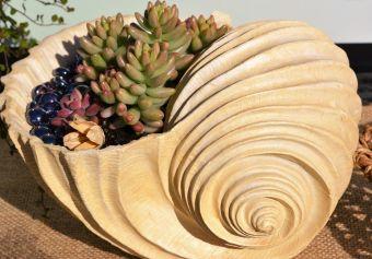 Coquille de succulentes