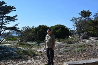 Rock devant les cyprès